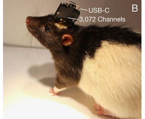 Neuralink rat test