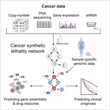 Kankeronderzoek celdood