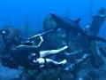 Lara vecht met een haai in Tomb Raider: Underworld