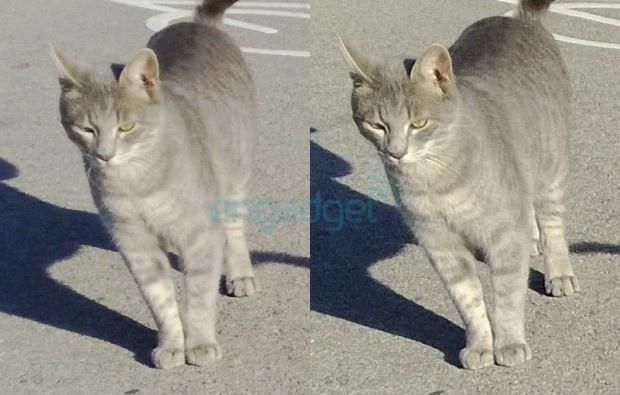 Foto van kat met Lumia 920 met PR 1.0 en PR 1.1