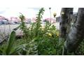 Foto gemaakt met Nokia 808 PureView voor review Xperia T