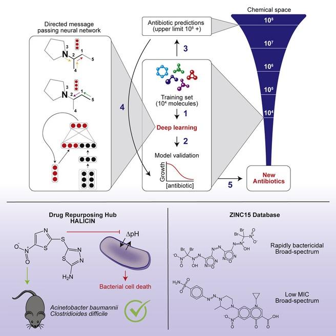 Deep learning antibiotica