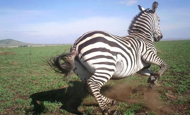 Deepmind Serengeti