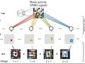 Brain Activity Patterns
