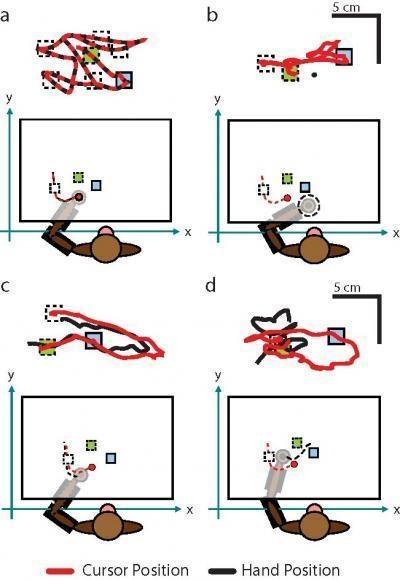 Representatie van verbeterde aansturing met sensorische feedback