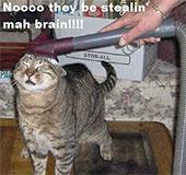 Stealing ma brain