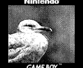 Game Boy Camera foto's