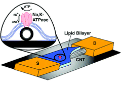 Bio-transistor